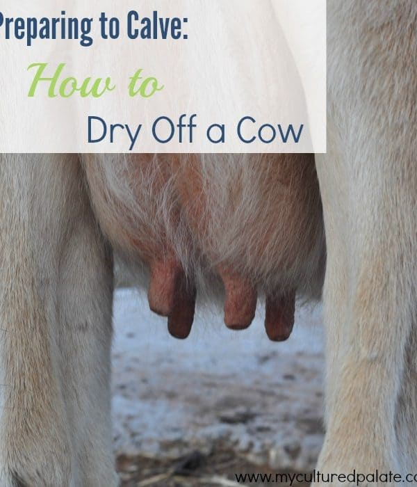 preparing-to-calve-how-to-dry-off-a-cow.jpg