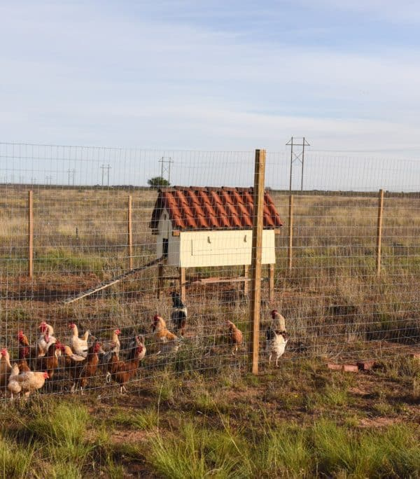 New Chicken Coop = No More Poop on My Porch!