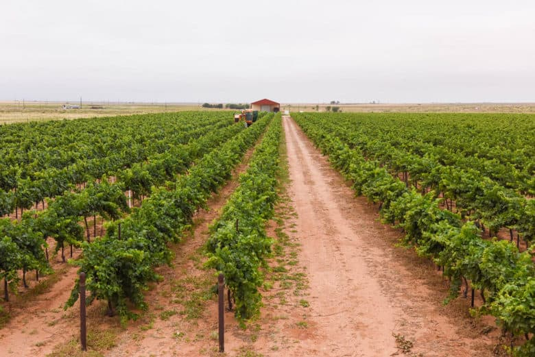 Canopy Management in the Vineyard