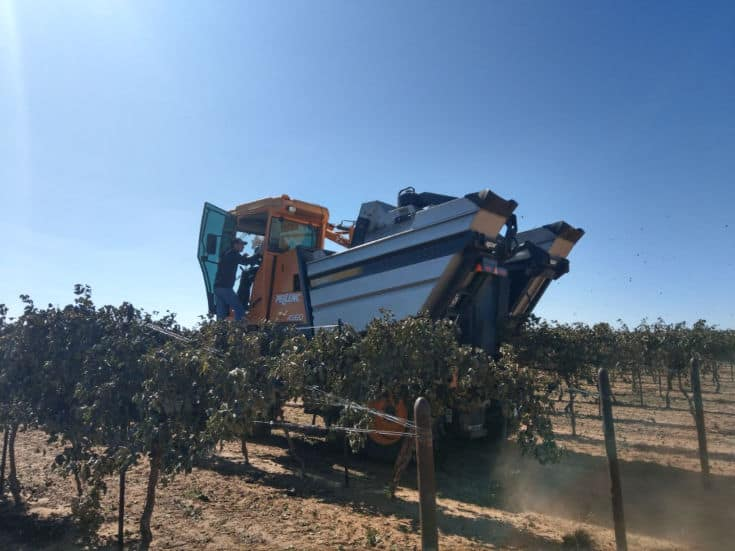 Montepulciano and Aglianico Harvest 2019 - Harvester in the vineyard.