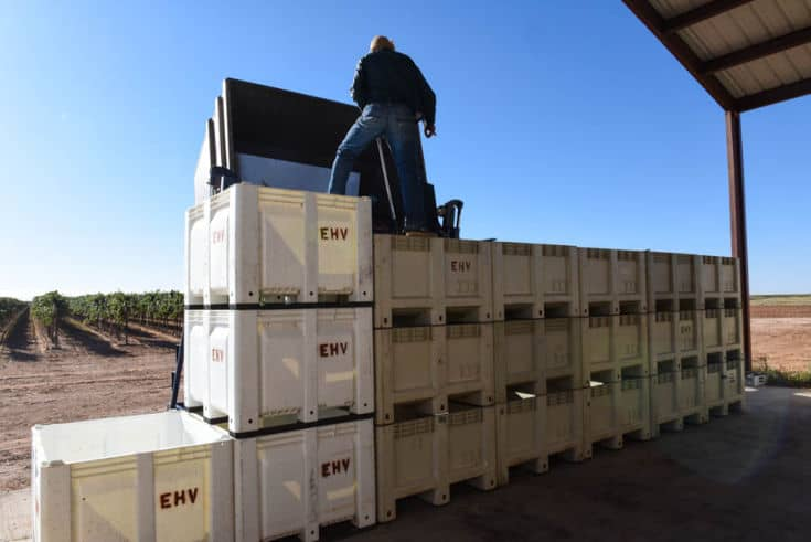 Triple stacked bins being loaded with grapes.