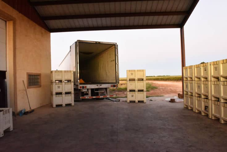 Montepulciano and Aglianico Harvest 2019 - A look at the barn, bins and semi. Waiting for the next load.