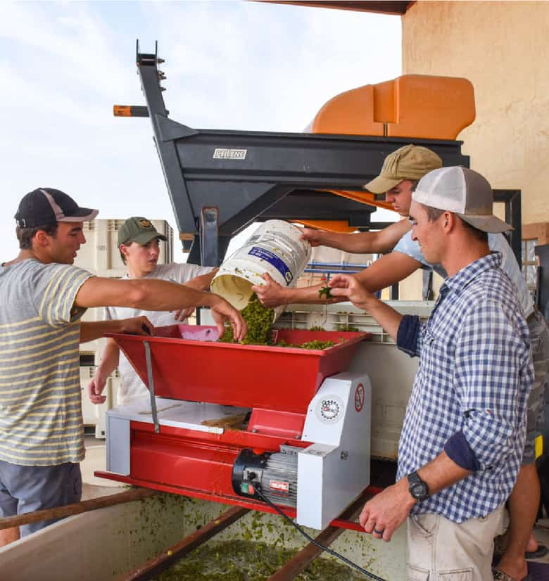 Guys crushing Roussanne grapes.
