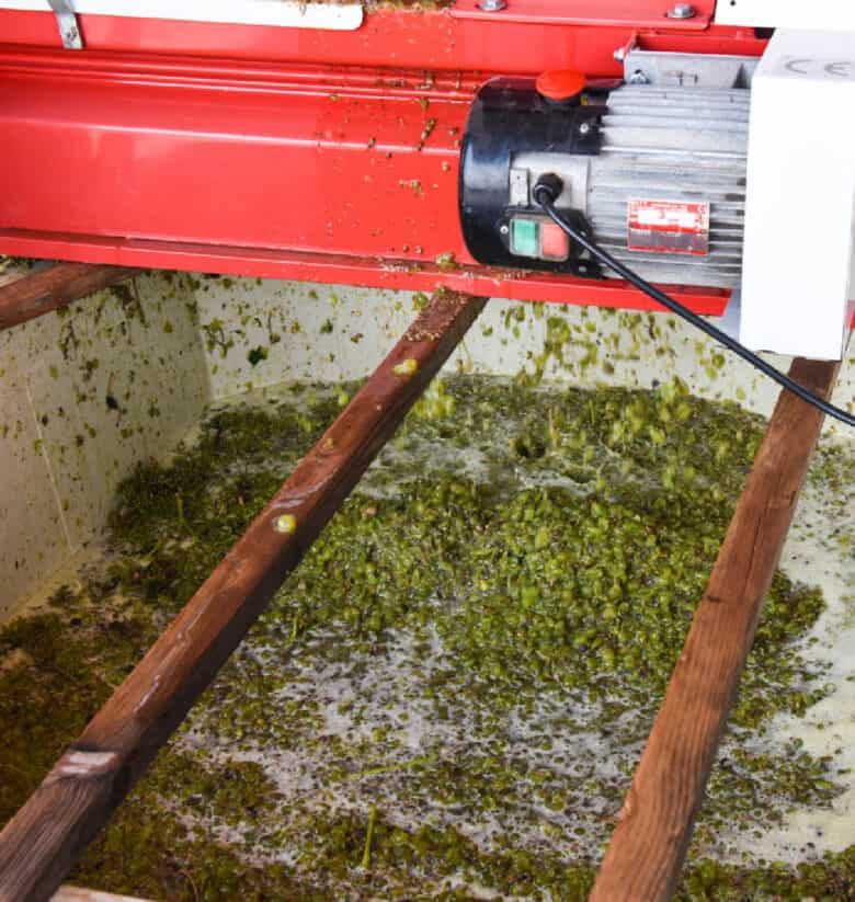 Crushed Roussanne grapes