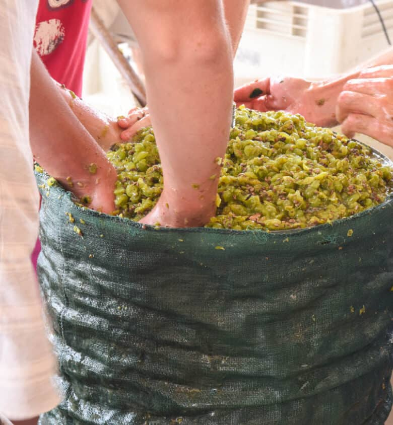 Pressing the grapes.
