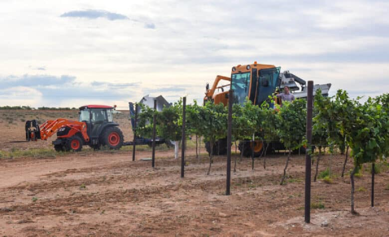 The tractor waiting for the harvester; the harvester coming out of a row of Albarino.