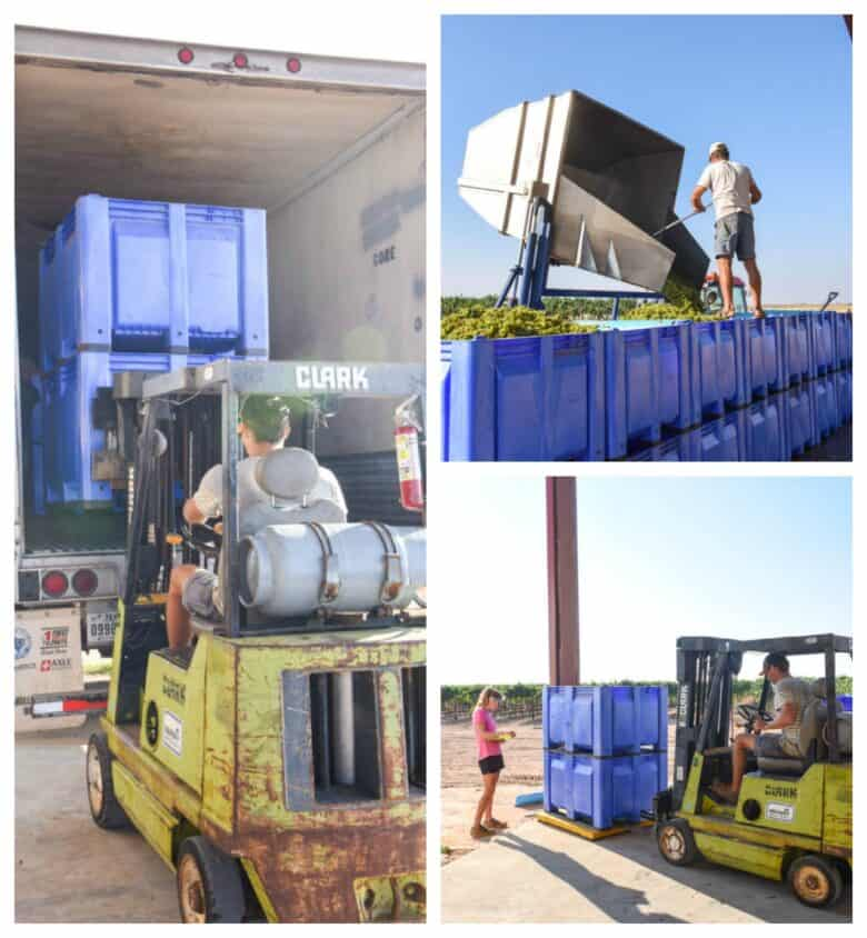 Collage pic, dumping, weighing and loading bins.