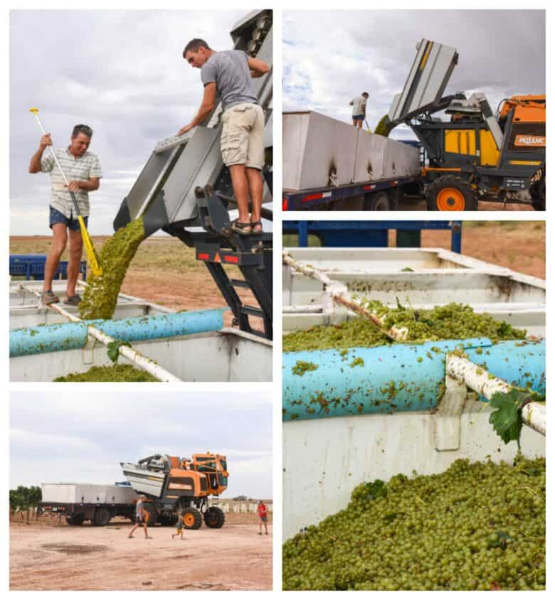 Roussanne Harvest 2020 - Collage of pictures of grapes, harvester and valley bins.