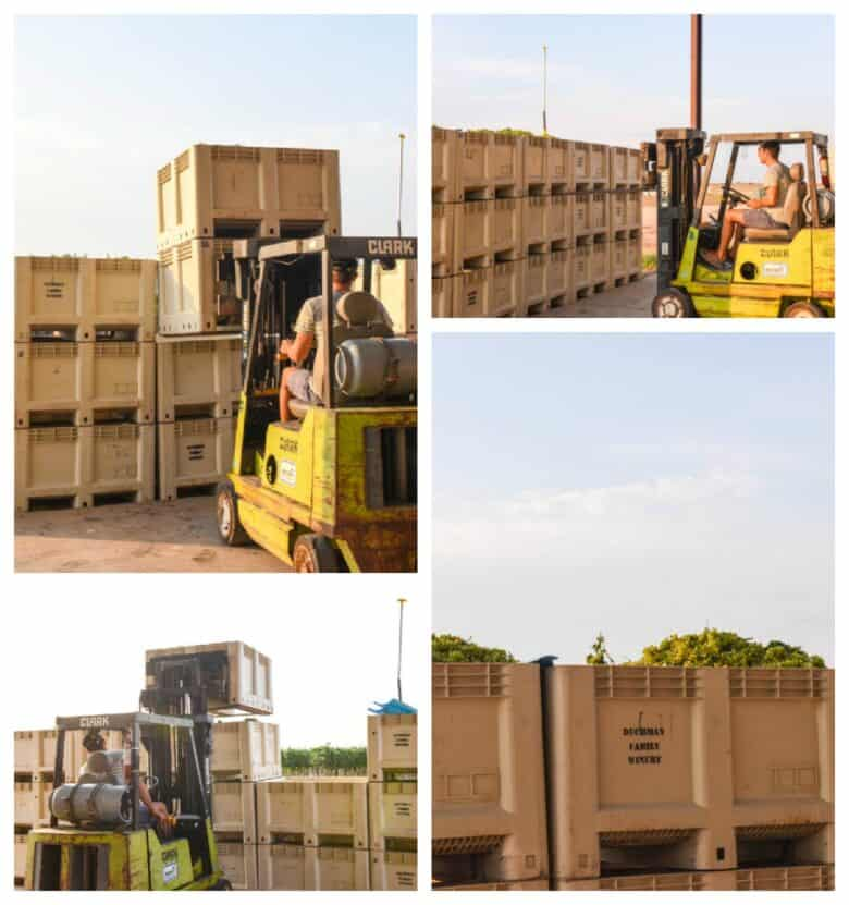 Collage pic, Roussanne grapes in bins.