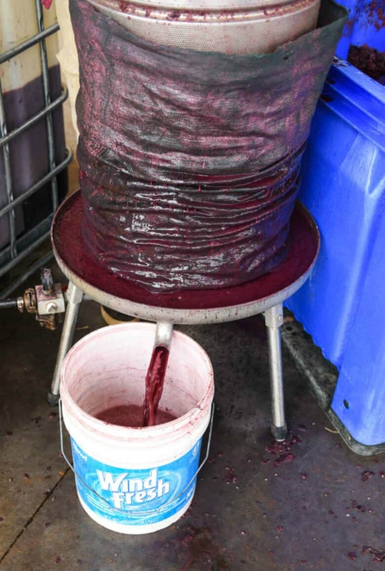 Pressing Montepulciano grapes - image showing the actual juice coming out of the press into a bucket.