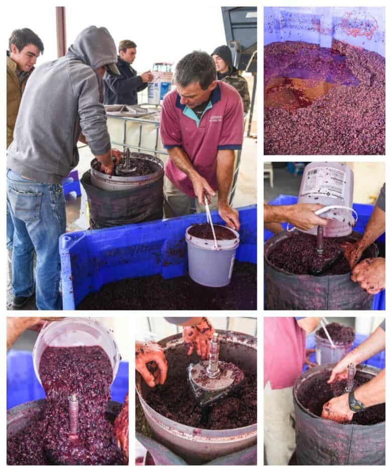 Pressing Montepulciano Grapes - Collage of pictures - fillling press