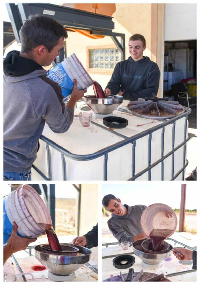 Pressing Montepulciano grapes - Collage of three pics with different images of filling the tote with juice.