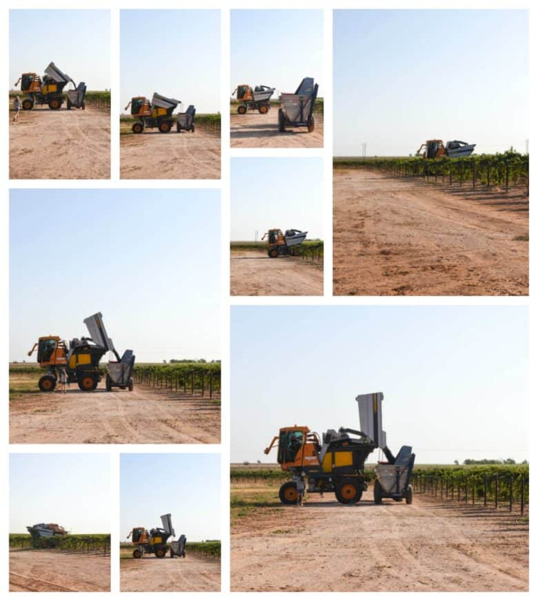 Aglianico Harvest 2020 - Collage of pictures; Pellenc harvester dumping into the dump buggy.