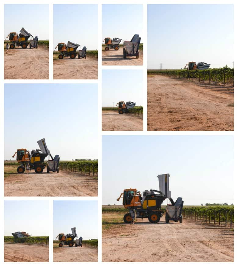 Collage pic; Pellenc harvester dumping into dump buggy