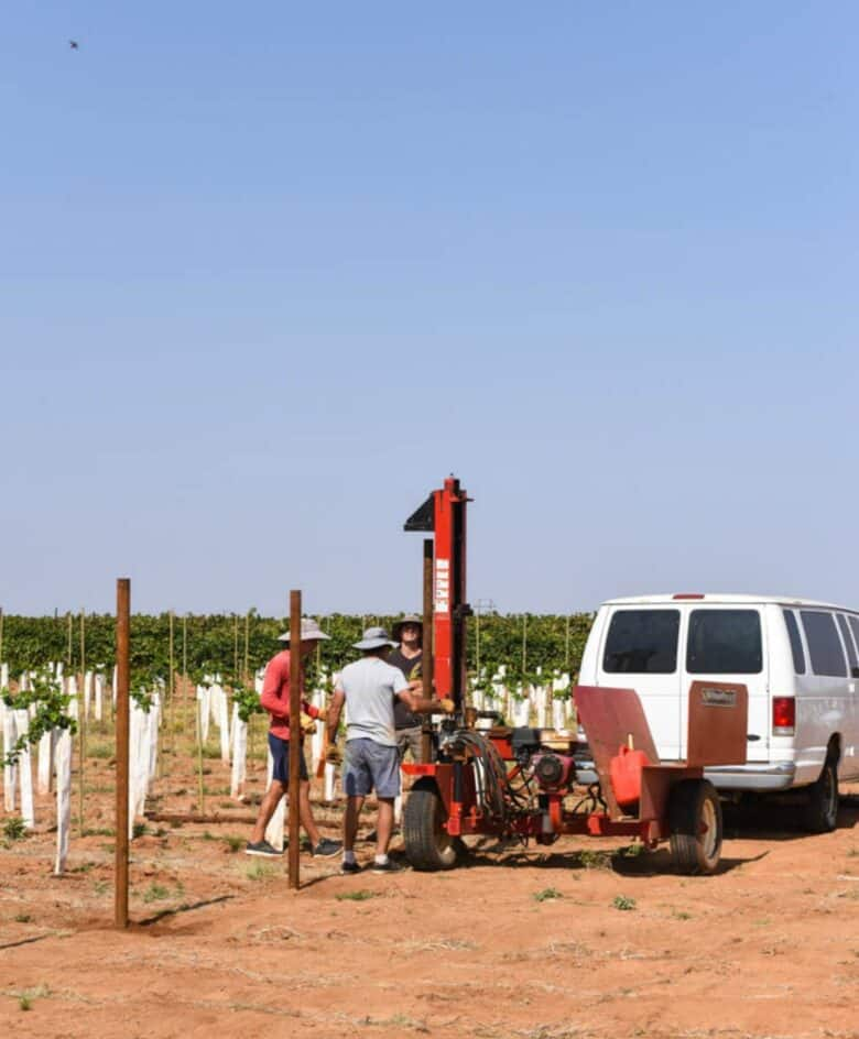 Vermentino Trellis - Putting in the end posts