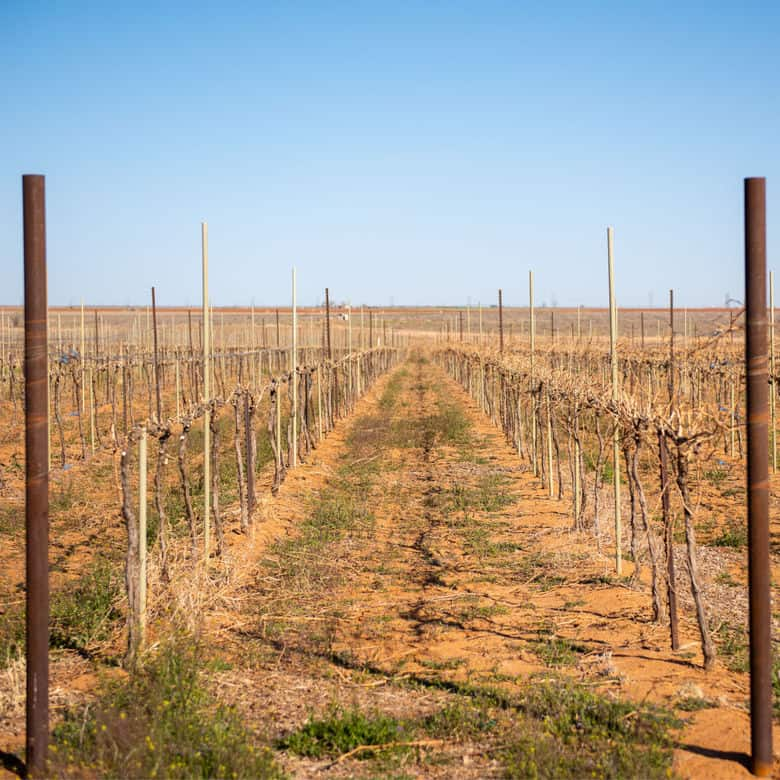 Pruning 2021 - A view down rows in the vineyard.
