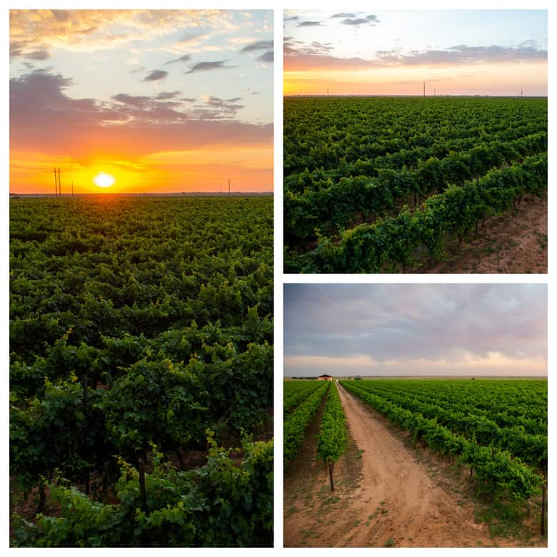 Summer in the Vineyard - Collage of pictures of the vineyard while the sun rises.
